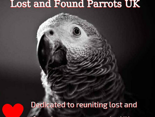 I've lost my parrot