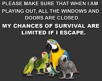 Lost & Found Parrot Team UK