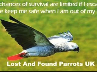 Keep your Parrots safe ❤