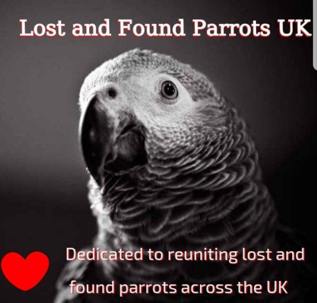 Home | Lost and Found Parrots UK