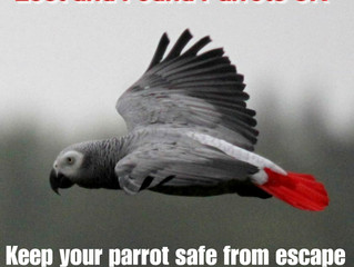 Keep your parrot safe this spring/summer