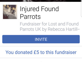 Lost and Found Parrots UK Facebook Fundraiser