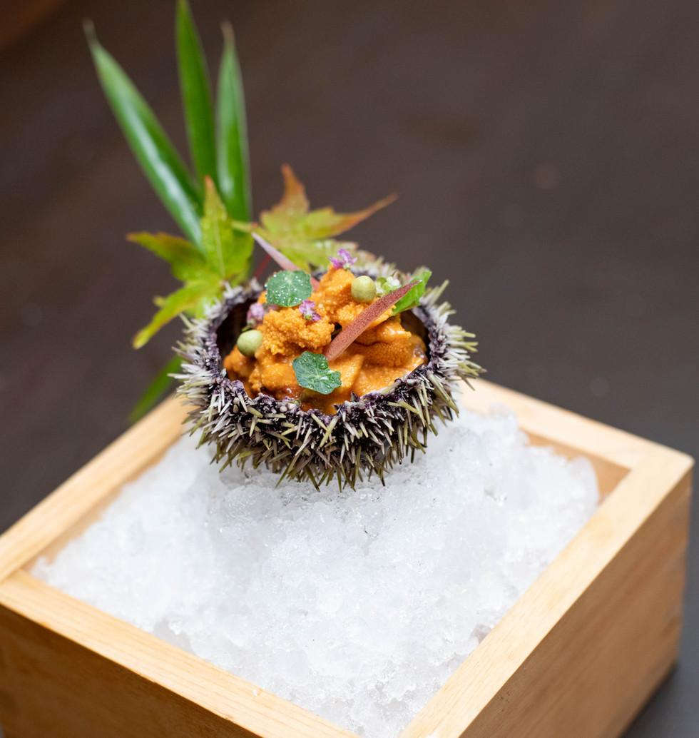 Fresh Sea Urchin.jpg