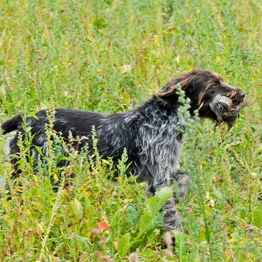 Introduction to HPR Hunting Day