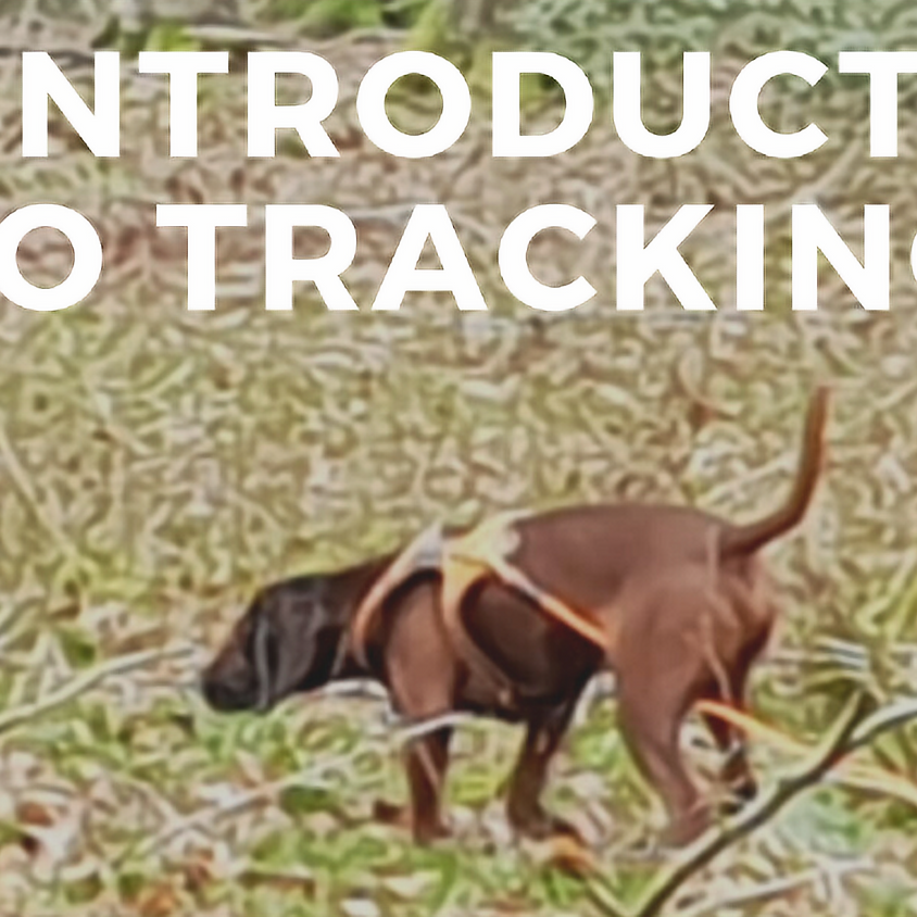 An Introduction to Tracking