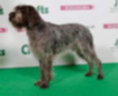 Breed Standard Dog 3.jpg