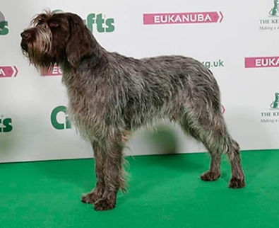 Breed Standard Dog 3.jpg