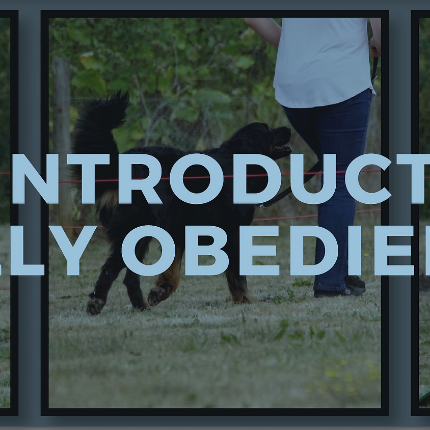 An Introduction to Rally Obedience
