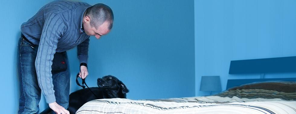 Détection canine punaise de lit