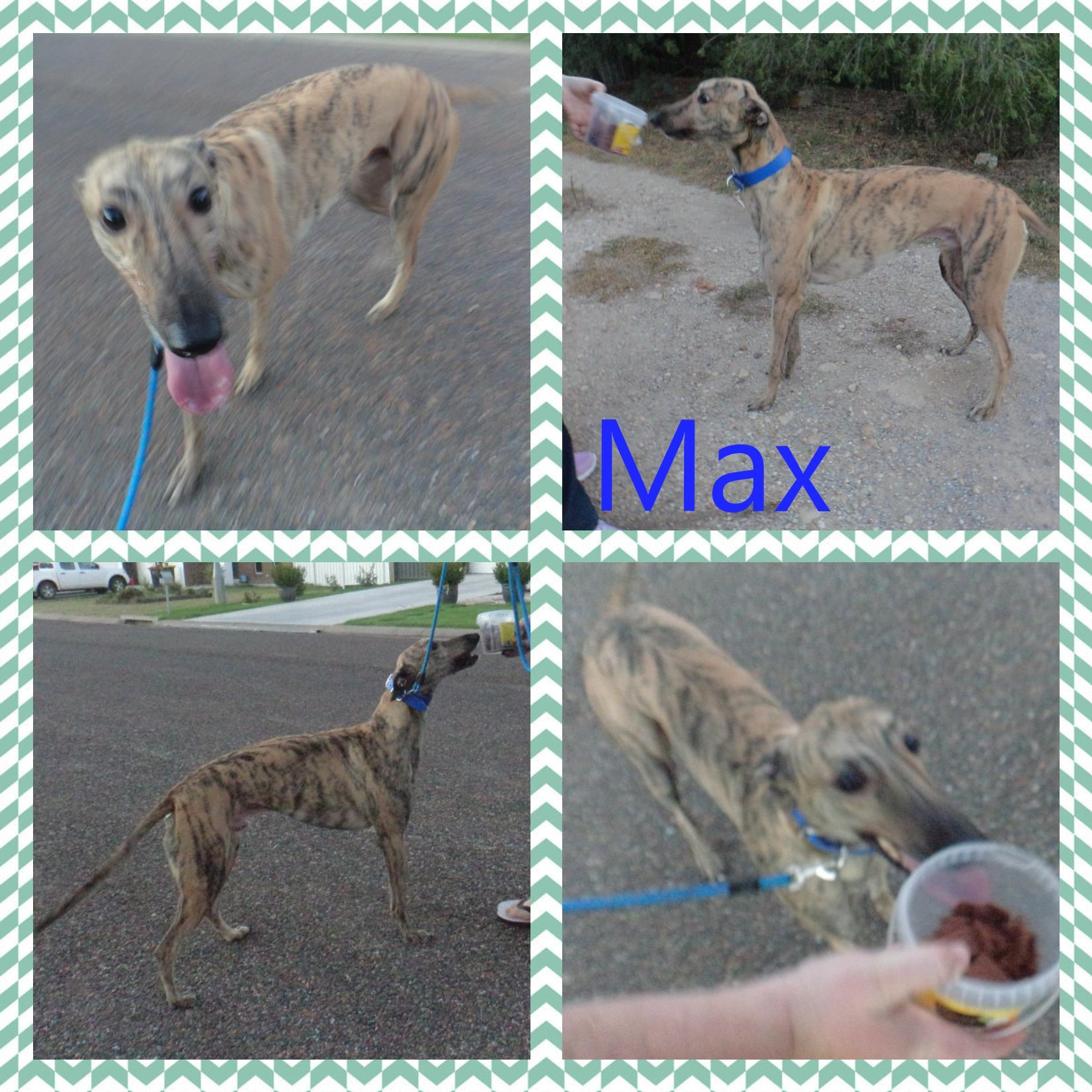 Max (Telarah Gold)