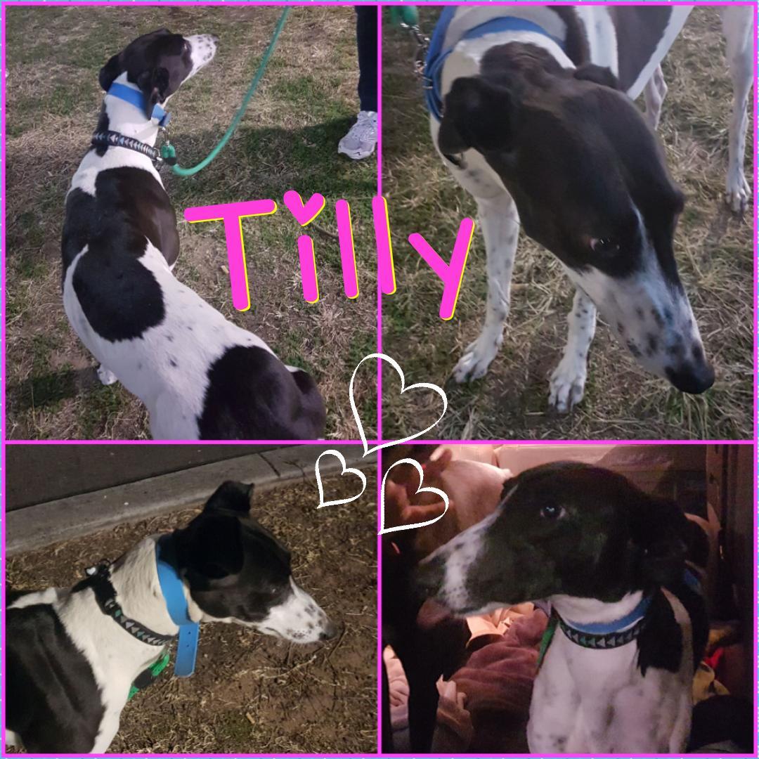Tilly (Weeronda Biss)