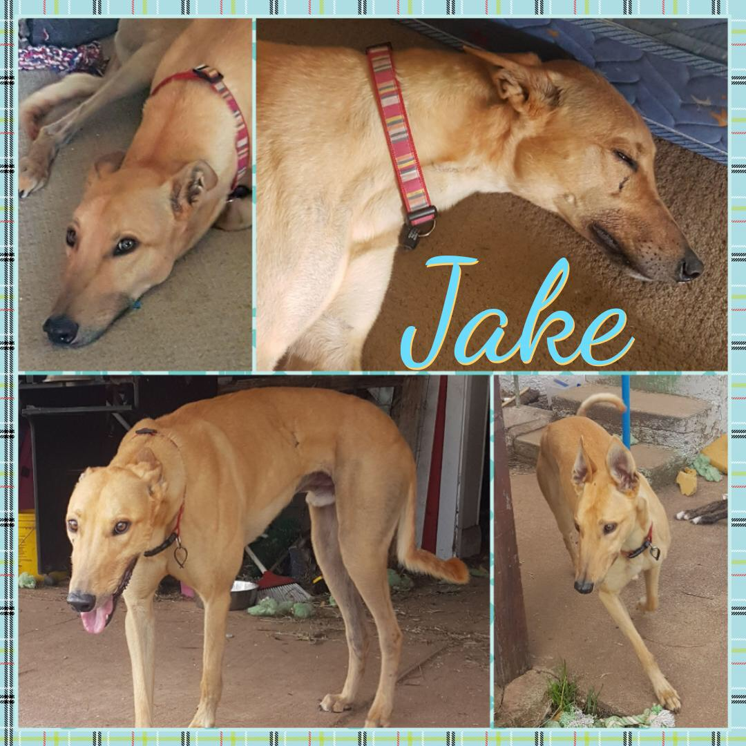 Jake (Justified)