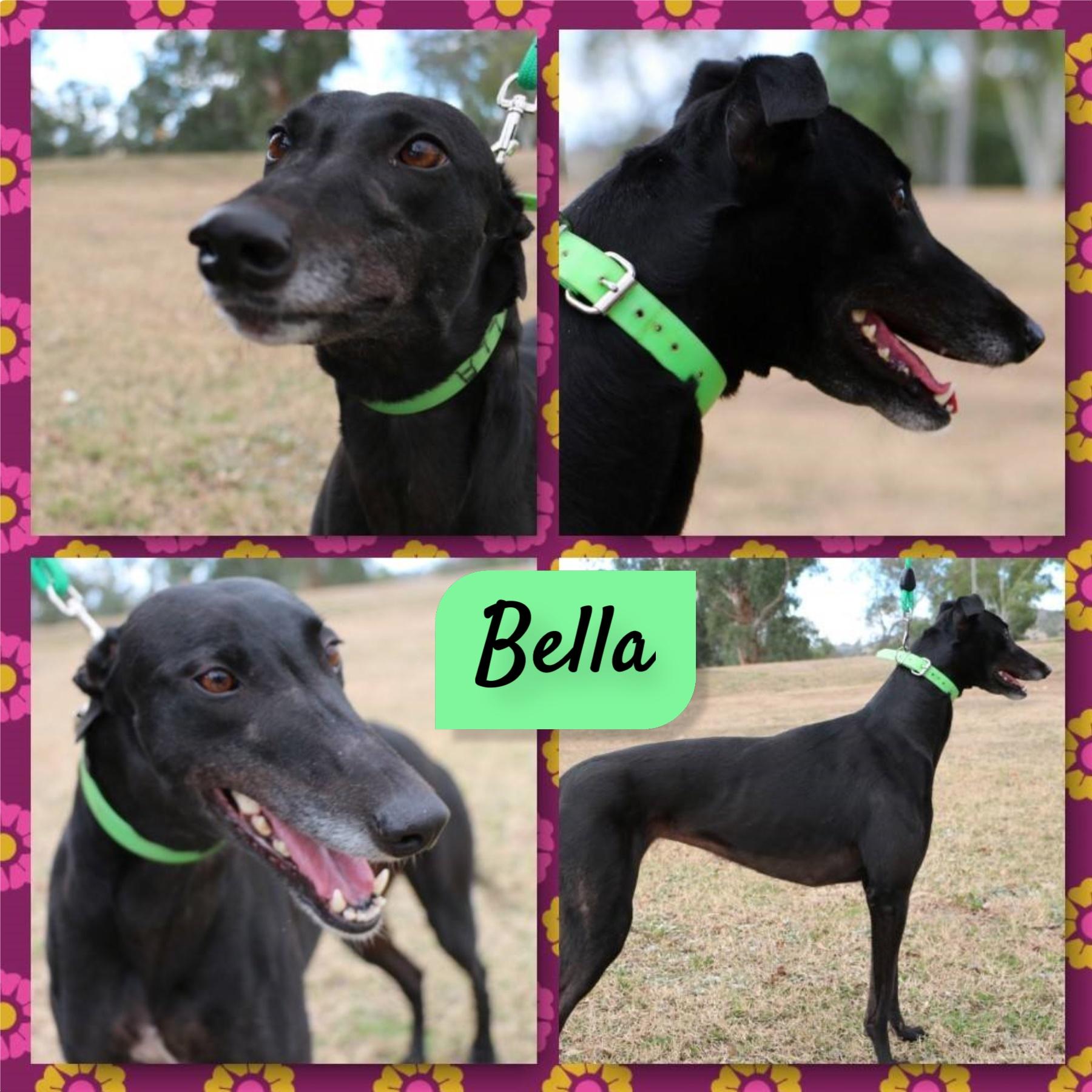 Bella (Shy Dasha)