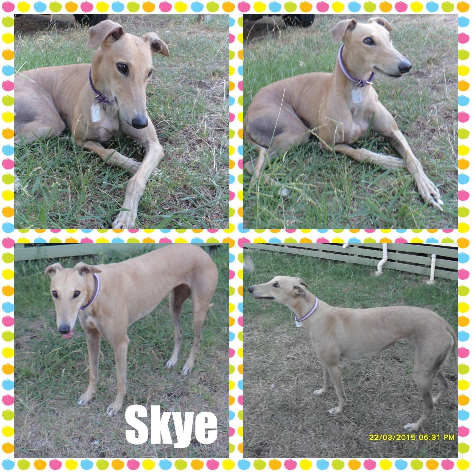 Skye (Stately Skye)
