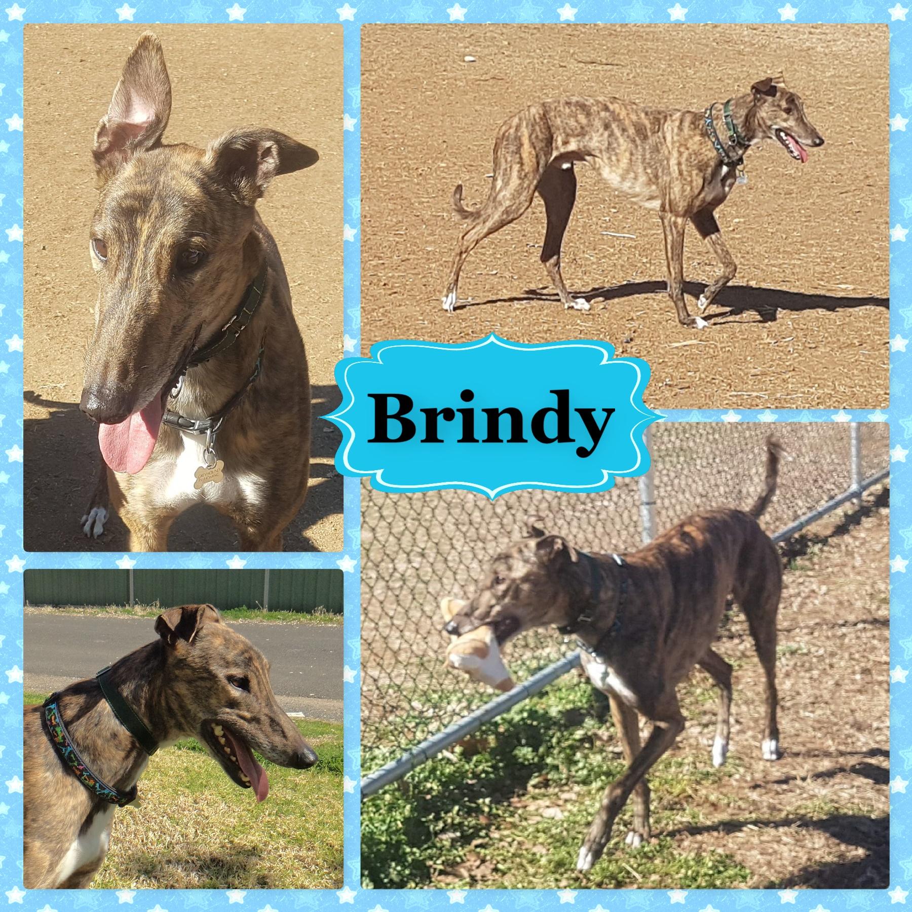 Brindy (Heroic Avenger)