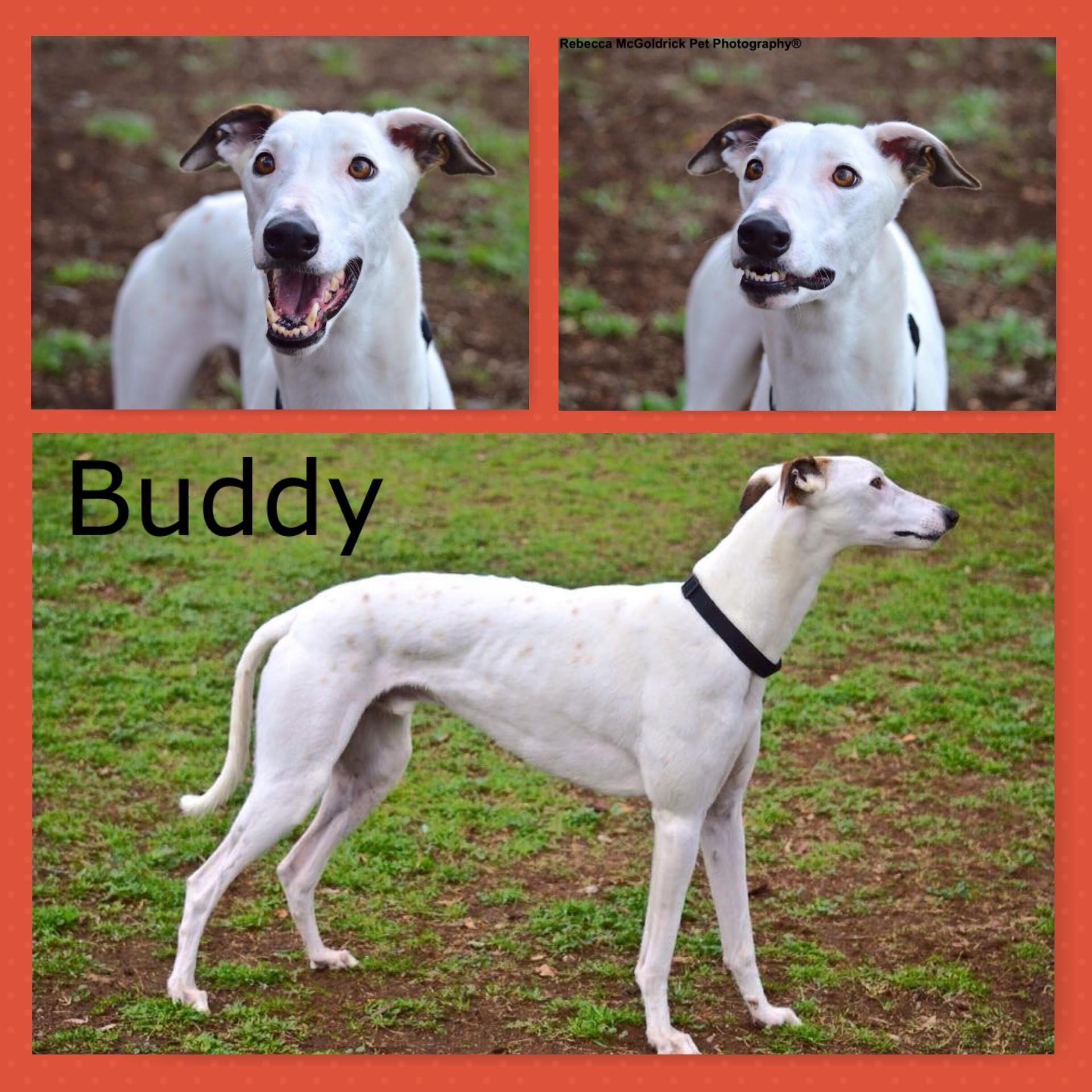 Buddy (Snow Flurry)