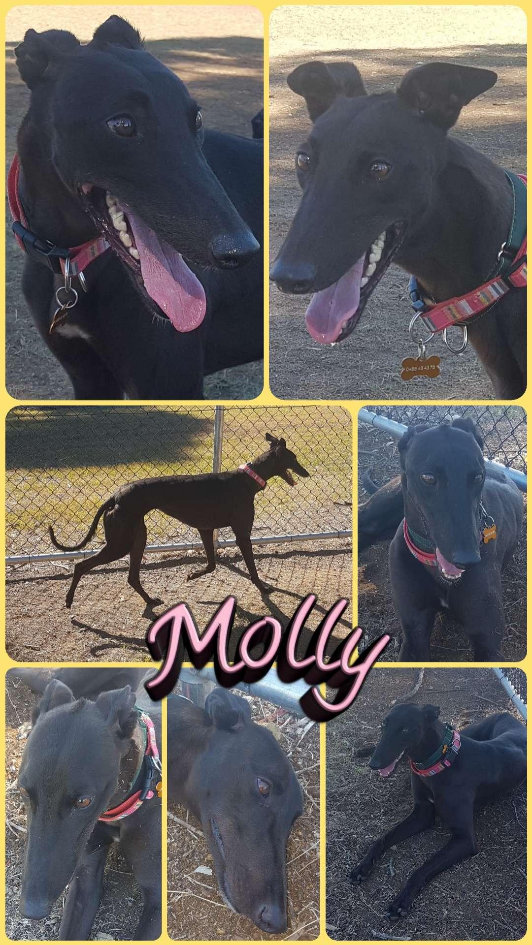 Molly (Maia Dolly)