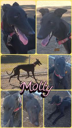 Molly (Now Mini)