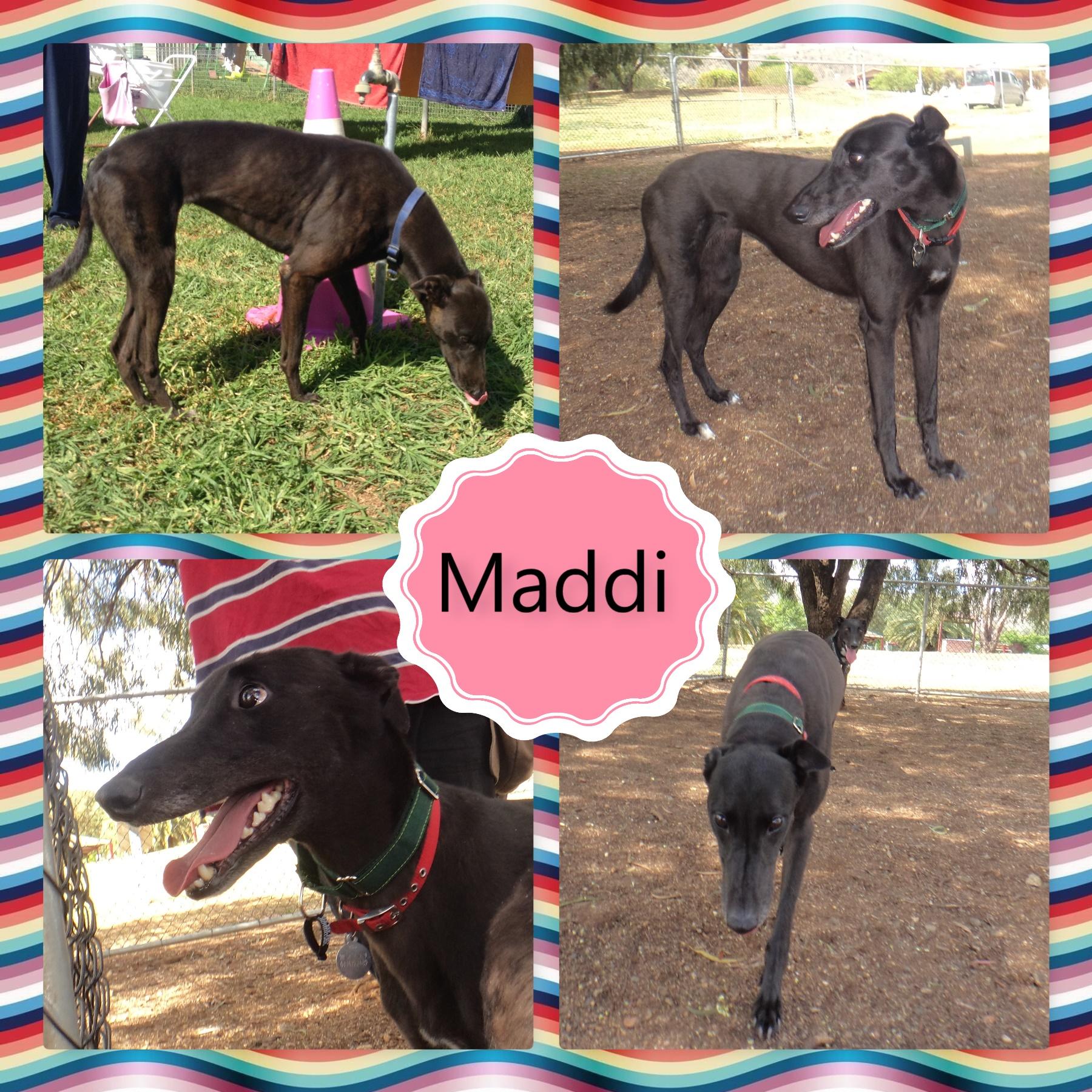 Maddi (Hartley Vogue)
