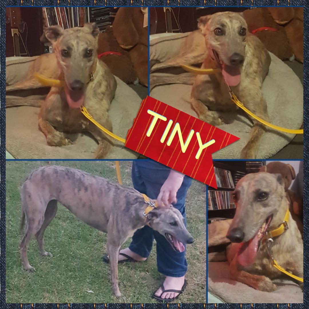 Tiny (Five Ay Em)