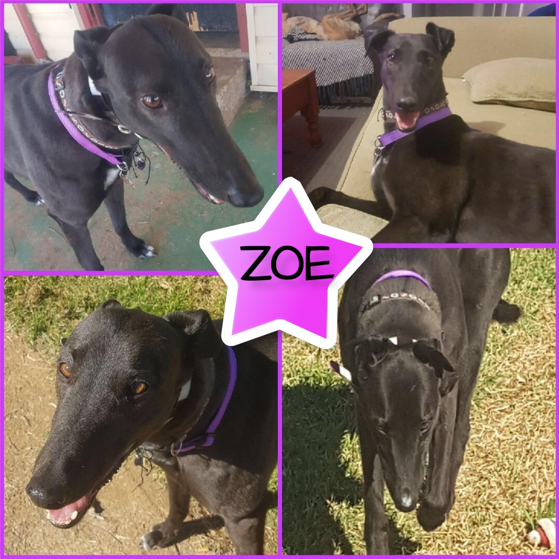 Zoe (Hypo Magic)