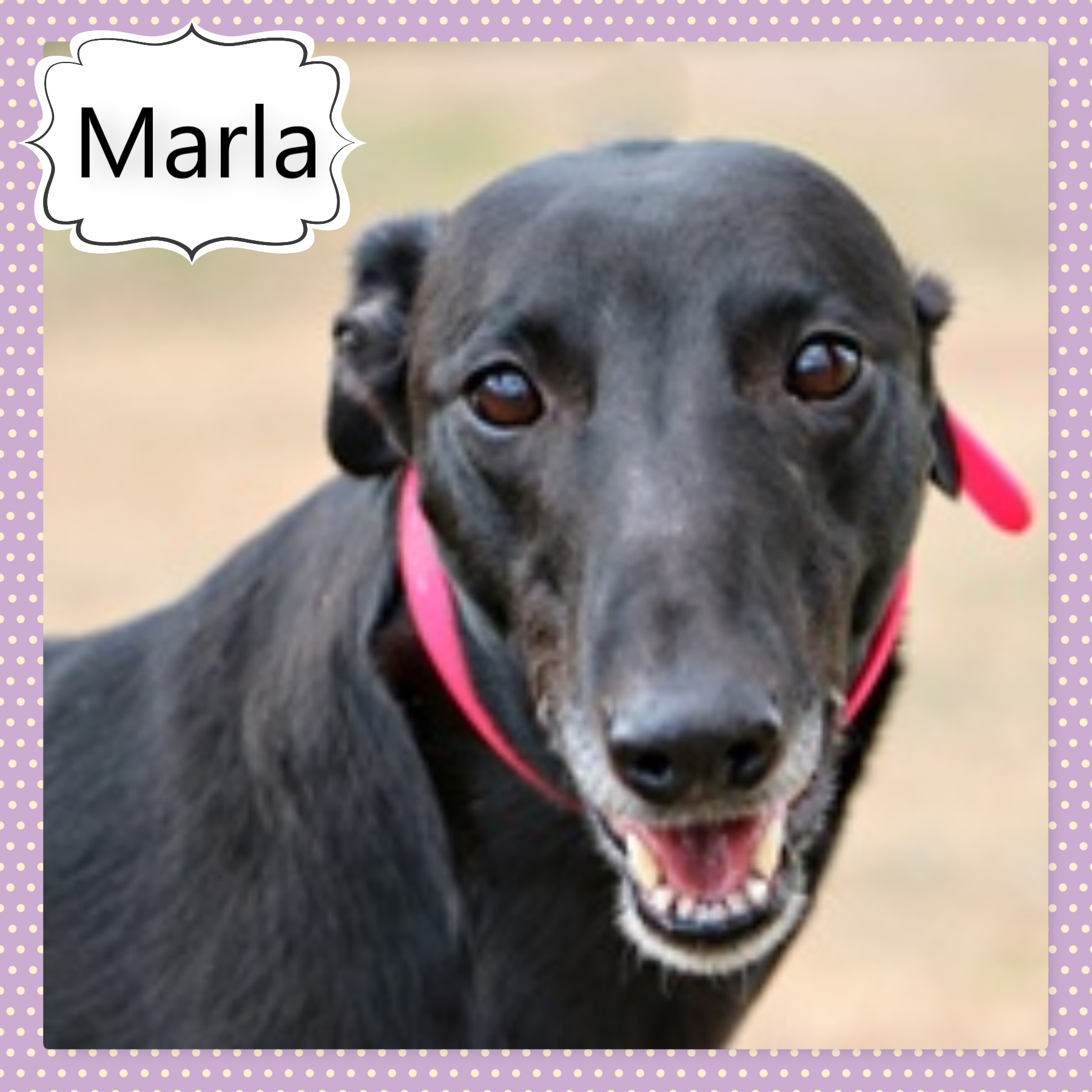 Marla (Marla's Goddess)
