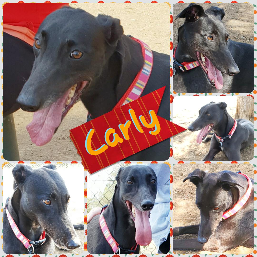 Carly (Rikasso Lilly)