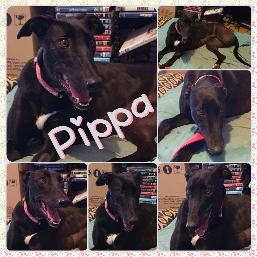 Pippa (Penny)