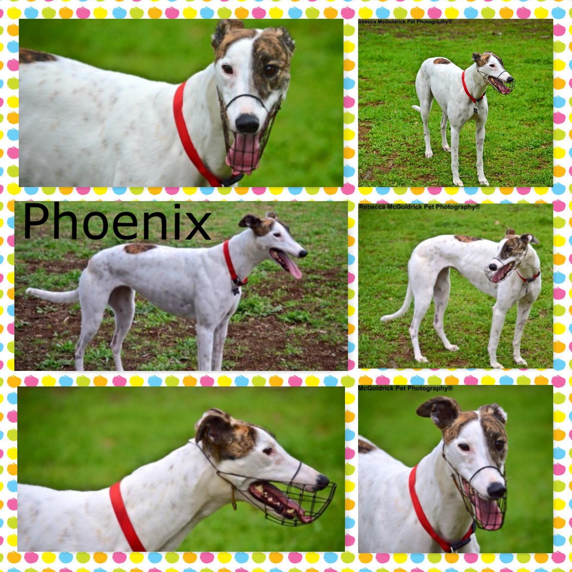 Phoenix (Select Phoenix)