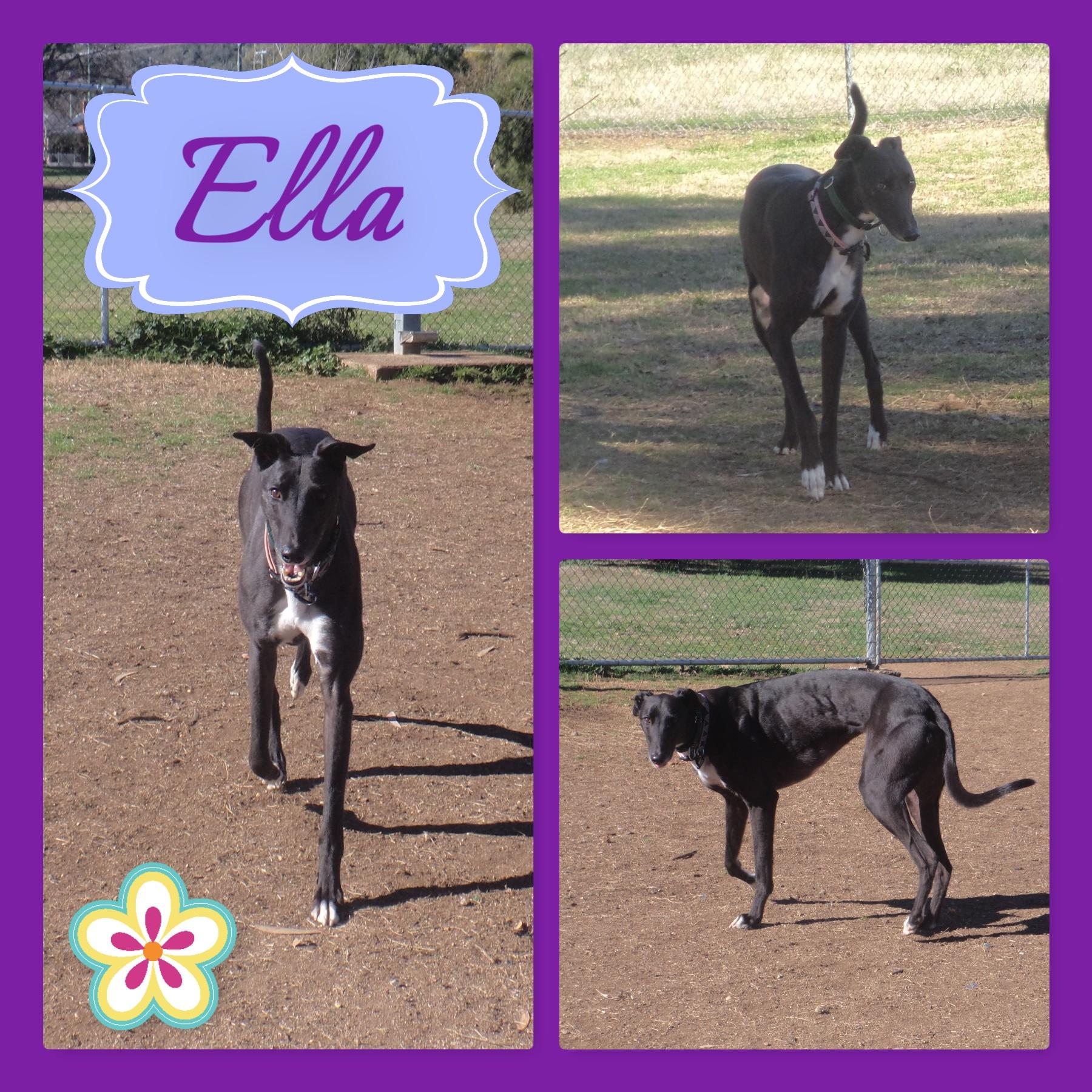 Ella (Mandolin Icon)
