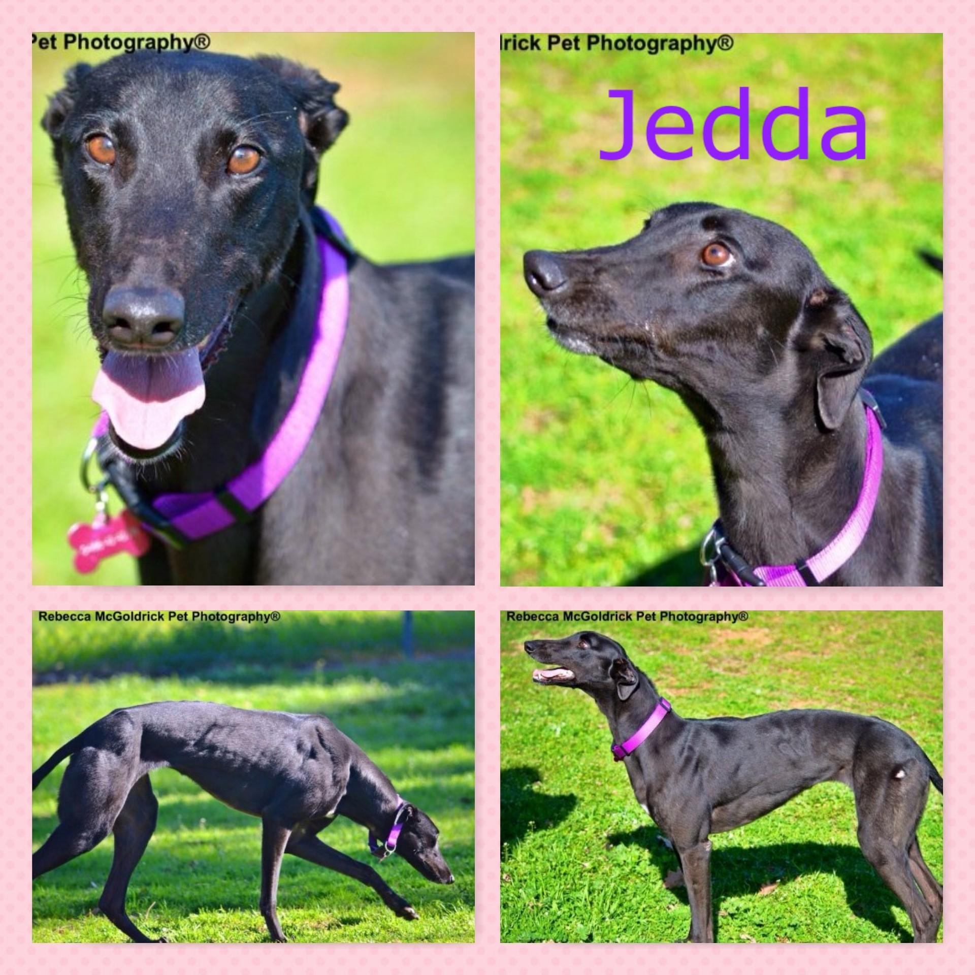 Jedda (Os Lotto)