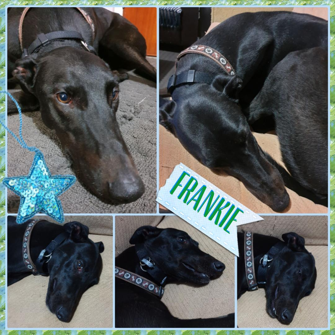 Frankie (Coolongolook Kid)