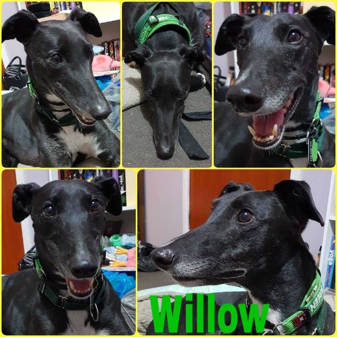 Willow (Mandolin Icon)