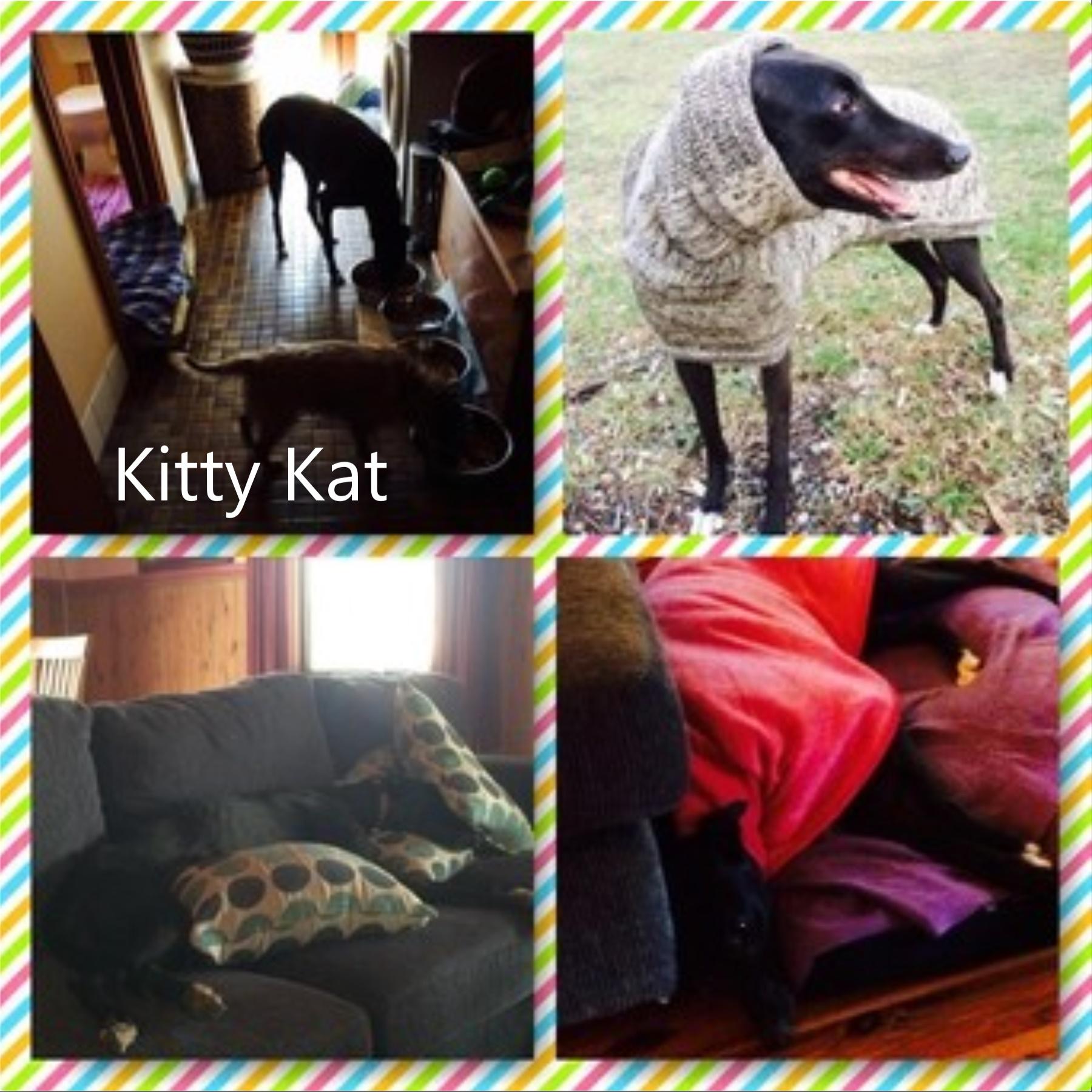Kitty Kat (Ashley's Tip)
