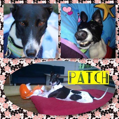 Patch (Bye Bye Roc)