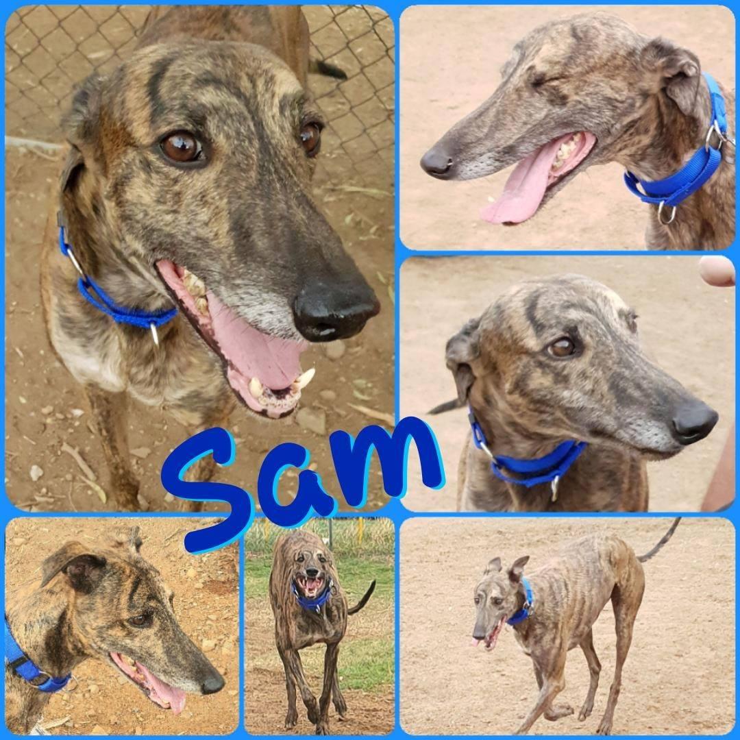 Sam (Spring Devil)