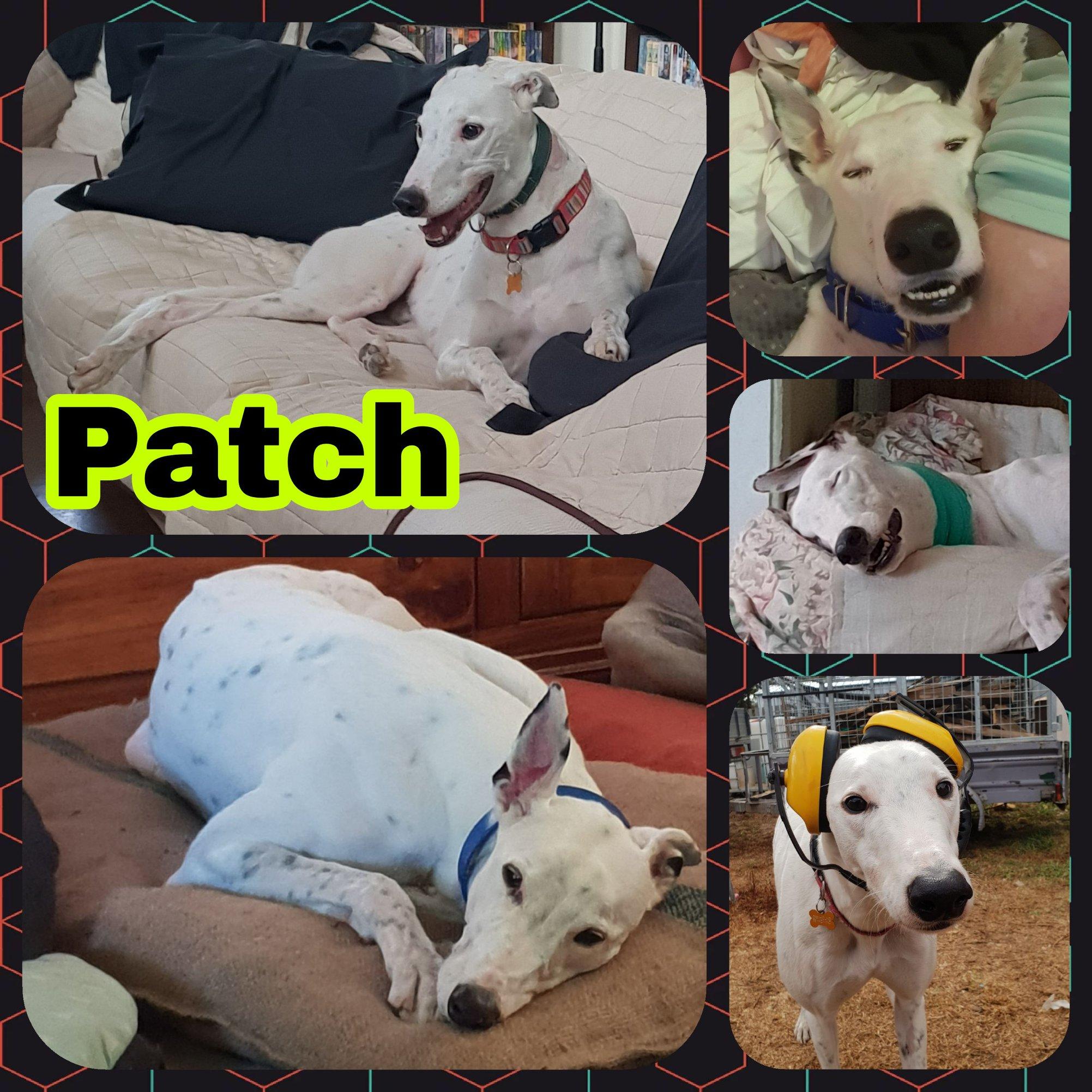 Patch (Patch His Zipper)