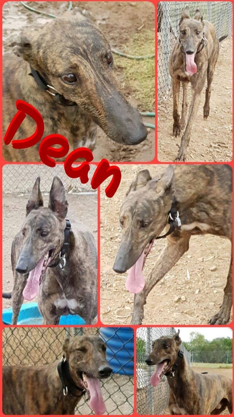 Dean (Gunner Go)
