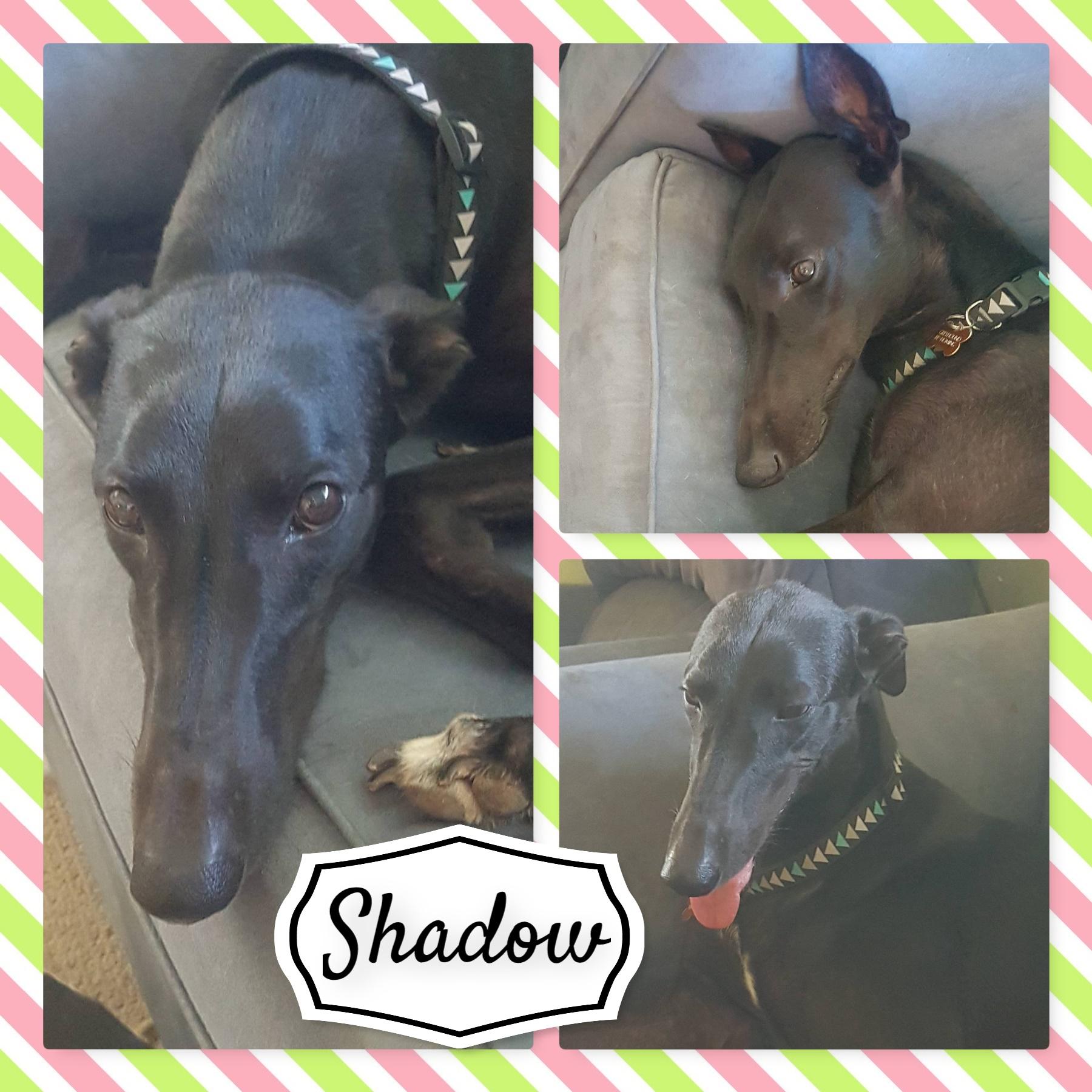 Shadow (In A Shadow)