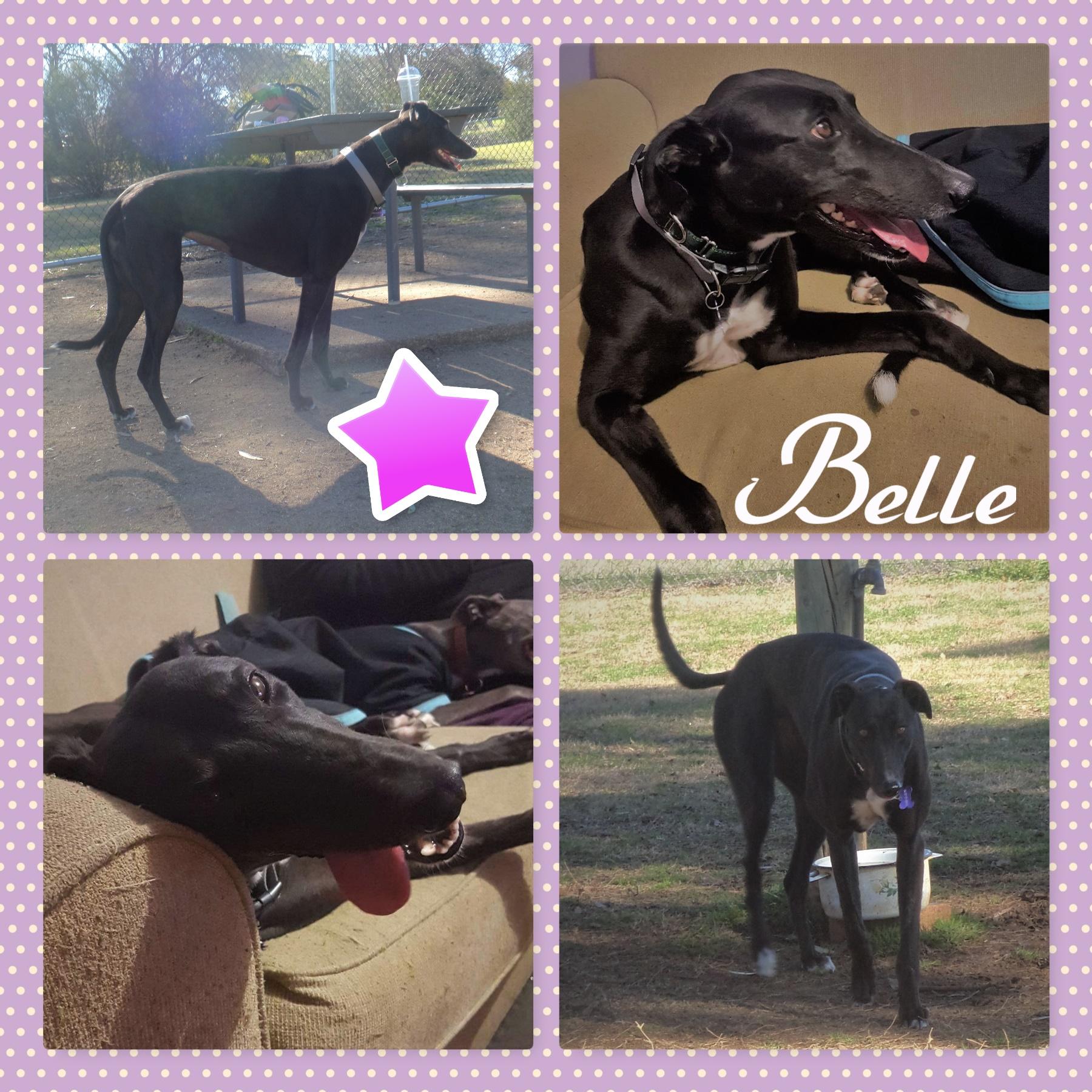 Belle (Great Belle)