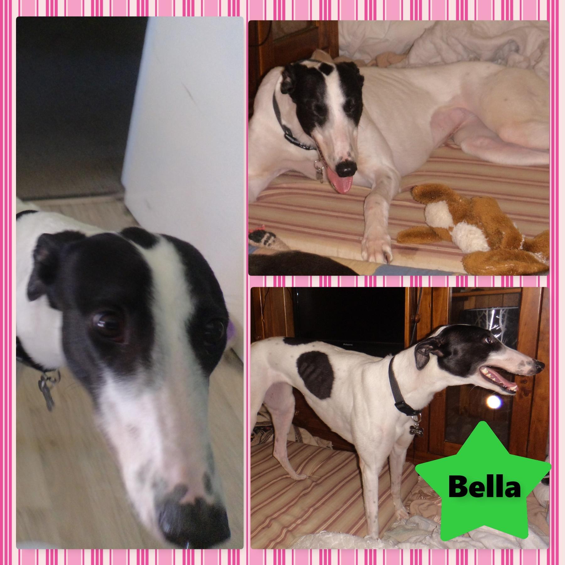 Bella (Five Star Kitty)