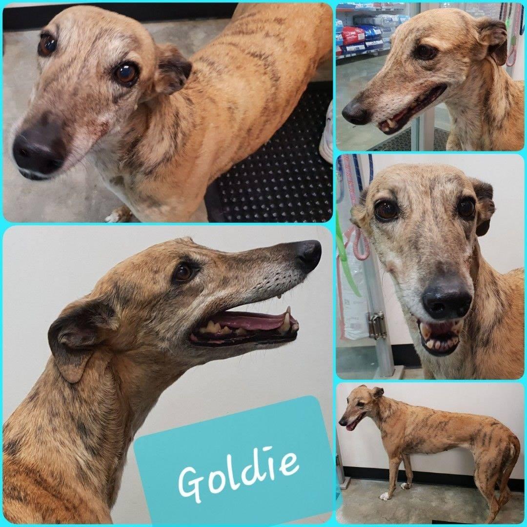 Goldie (North Coast)