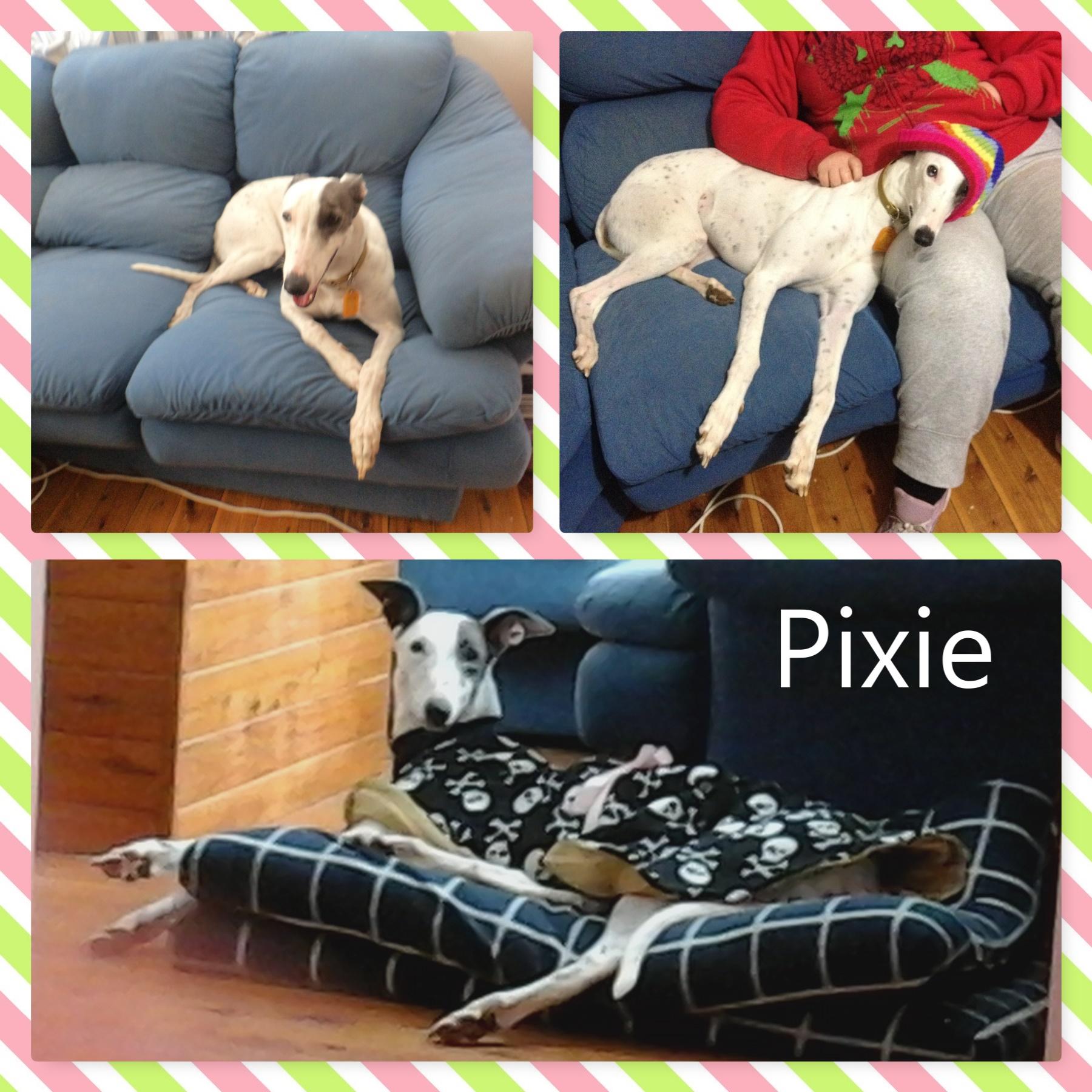 Pixie (Little Patches)