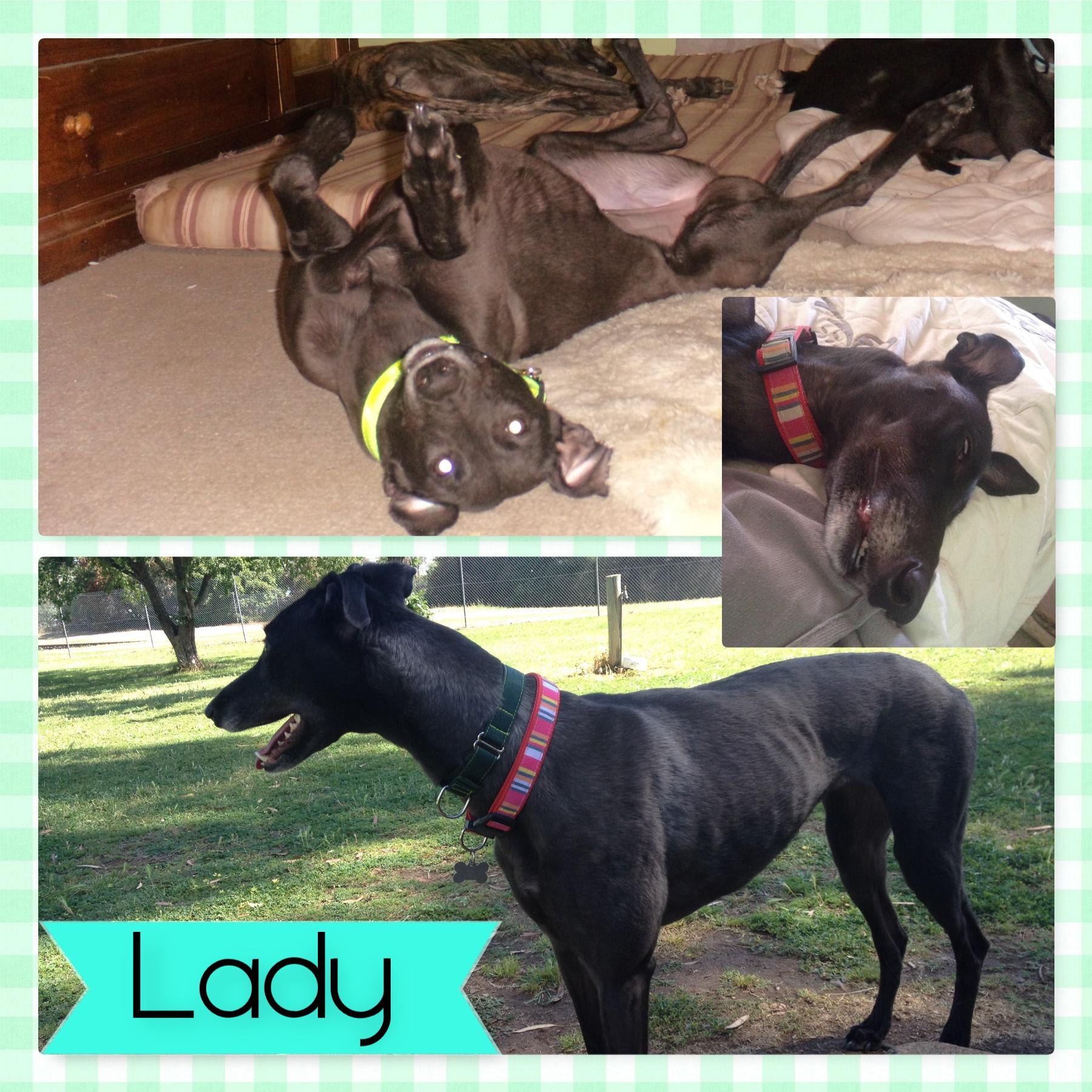 Lady (Lady Lynstan)