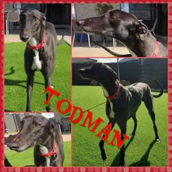 Todman (Toddy)