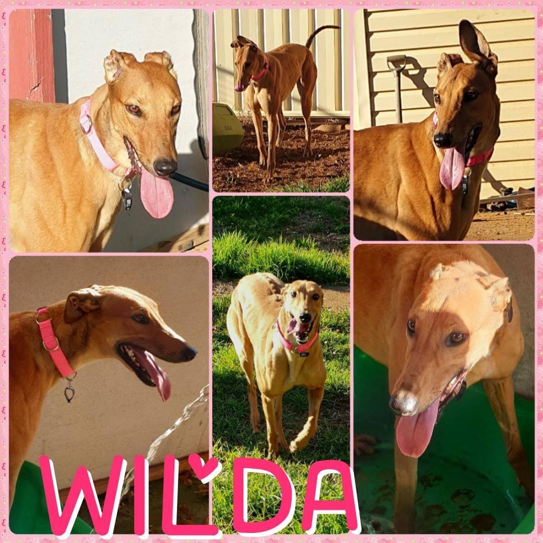 Wilda (Wilder Freak)