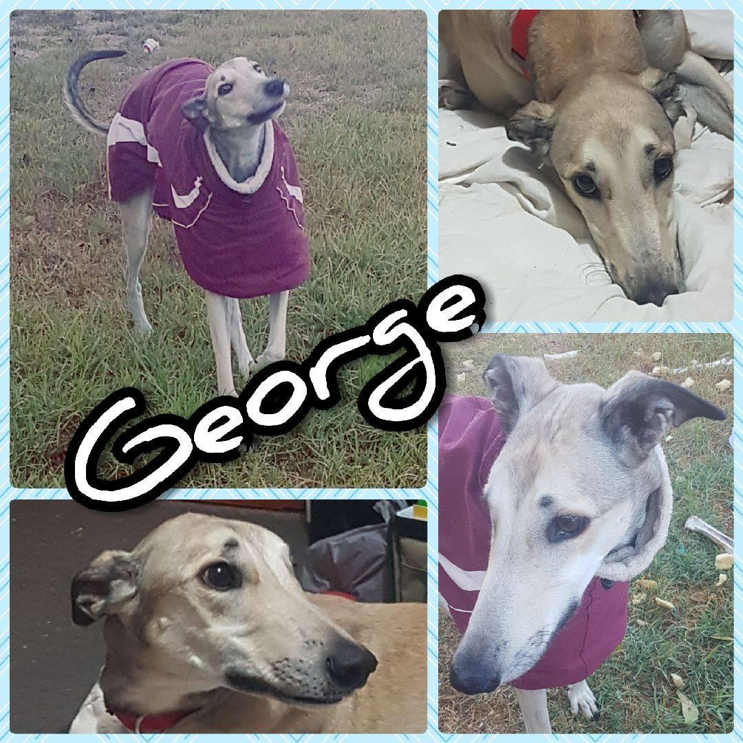George (King Zipper)