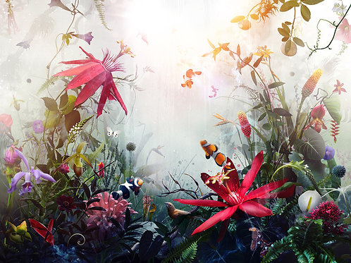 Anemonia