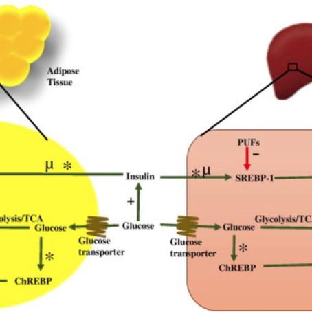 Lipogenesis - nýmyndun fitu úr glúkósa