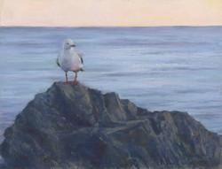 Dawn Patrol, Kirra Beach